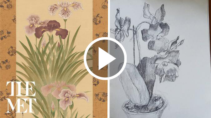 Video preview image of a Japanese silk hanging scroll depicting Irises and a Moth next to a hand drawn picture of a houseplant