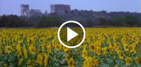 Video still: A sunflower field in Arles, France