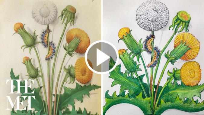 Flower Studies   Drop-in Drawing